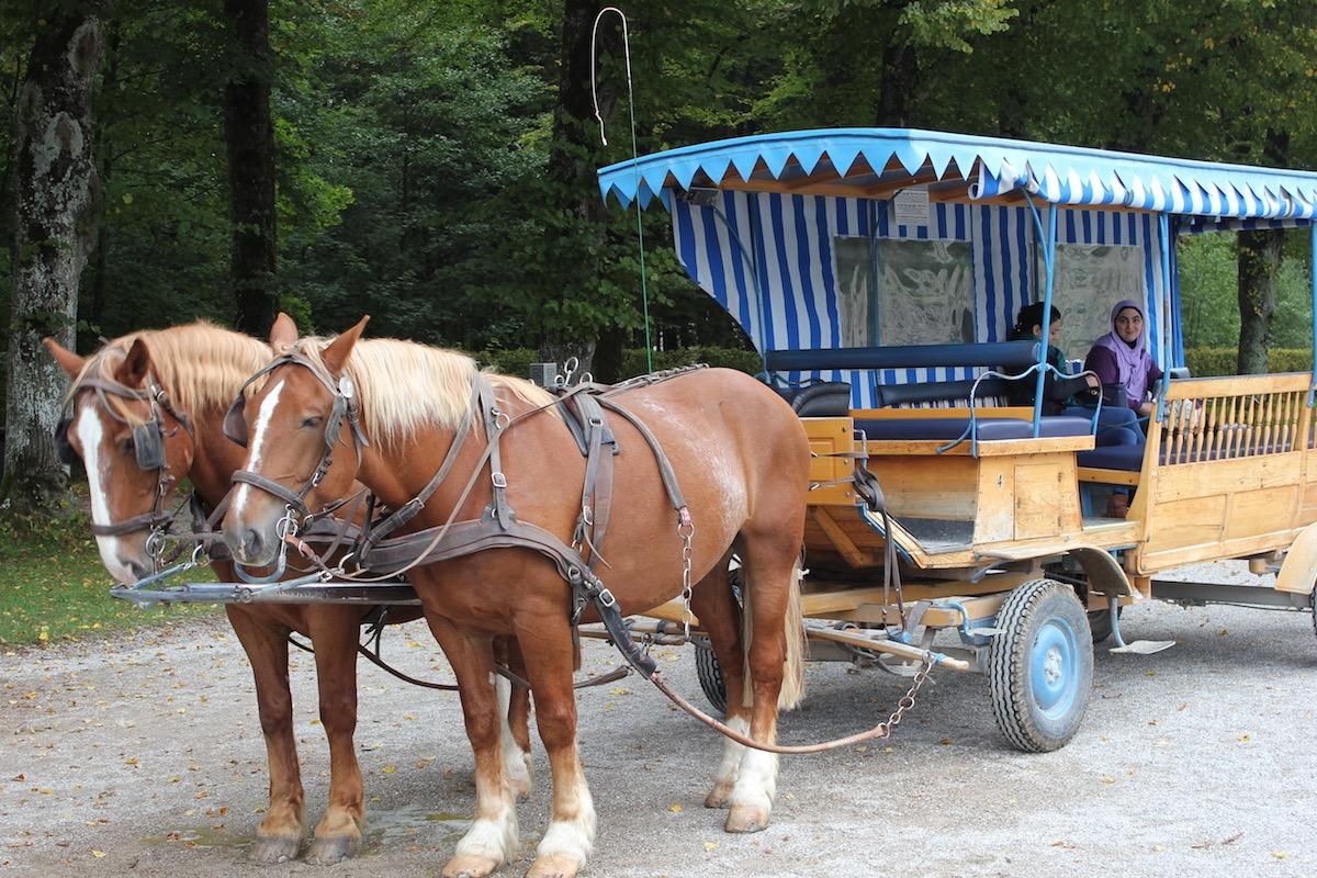 Повозка в ожидании уставших туристов