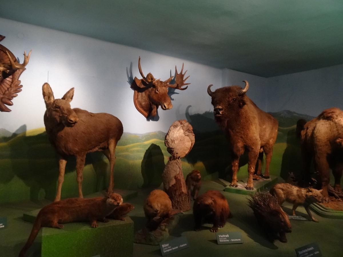 Дом природы в Зальцбурге