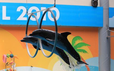 Танго над водой